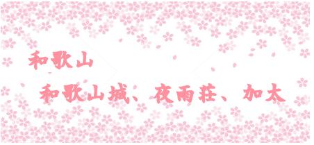wakayamasakura.png